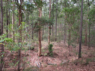 The Hut, Nestled in the bushland at the base of Mt Coot-Tha